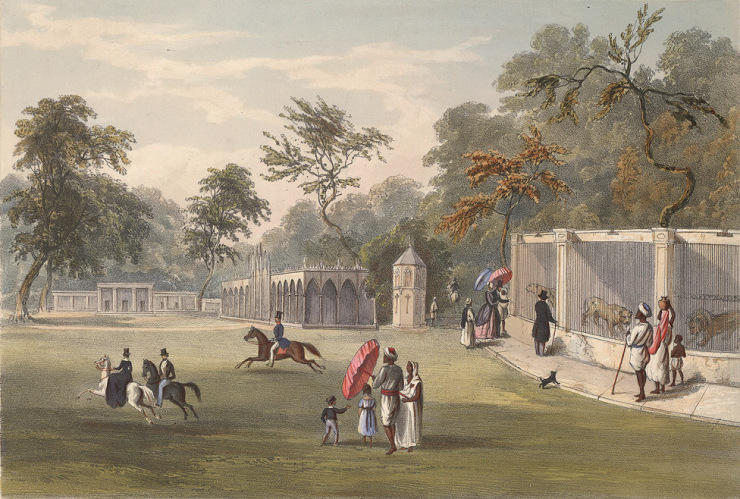 Menagerie at Barrackpore, Lithograph ( coloured ). Charles D'Oyly. 1848. Courtesy: British Library